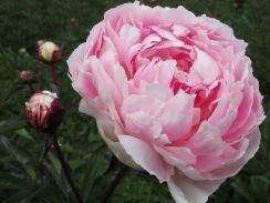 Sarah Bernhardt (4)